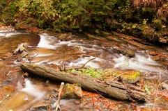 Река осени с листьями Стоковое Фото