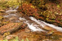 Река осени с листьями Стоковая Фотография