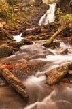 Река осени с листьями Стоковые Фотографии RF