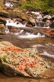 Река осени с листьями Стоковая Фотография RF