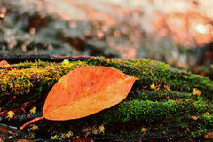 Река осени с лист Стоковое фото RF