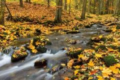 Река осени Стоковая Фотография RF