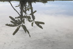 Река отражения дерева красивое в природе Стоковая Фотография