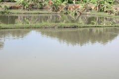 Река отражения дерева красивое в природе Стоковое фото RF