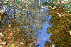 Река отражения дерева Стоковые Фотографии RF