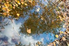 Река отражения дерева Стоковая Фотография