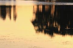 Река отражения и дерево тени в заходе солнца воды красивом nat Стоковое Изображение RF