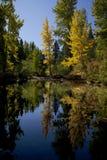 река отражения осин Стоковое Фото
