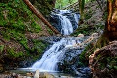Река долгой выдержки и зеленый камень мха в лесе Стоковая Фотография