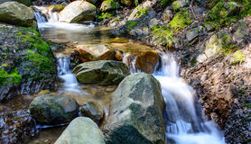 Река долгой выдержки и зеленый камень мха в лесе Стоковое Изображение