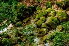 Река долгой выдержки и зеленый камень мха в лесе Стоковая Фотография RF