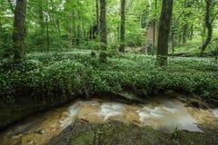 Река полесья Стоковое Фото