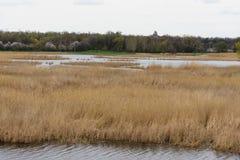 Река при банки перерастанные с тростниками стоковые фото