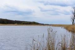 Река при банки перерастанные с тростниками стоковая фотография rf