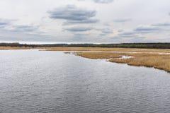 Река при банки перерастанные с тростниками стоковые изображения