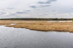 Река при банки перерастанные с тростниками стоковое изображение