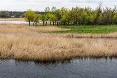 Река при банки перерастанные с тростниками стоковое изображение rf