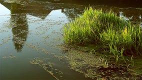 Река пропускает их собственный курс нося вегетацию сток-видео
