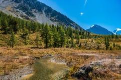 Река пропускает на ноге гор покрытых с деревьями Стоковая Фотография RF