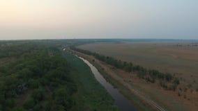 Река пропускает рядом с древесиной сток-видео