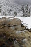 Река пропускает через ели Стоковая Фотография
