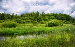 Река пропускает через луга в Беларуси Стоковое фото RF