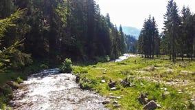 Река пропуская в красивом лесе видеоматериал
