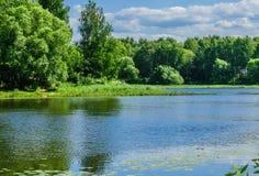 Река пропуская среди леса стоковое изображение rf