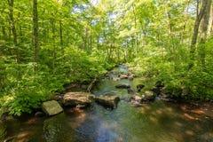Река пропуская через лес стоковое фото rf