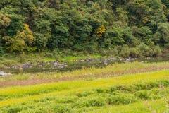 Река пропуская через сельскую местность Стоковое Изображение RF