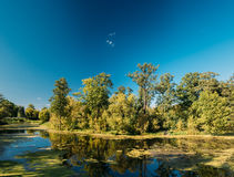Река пруда озера ландшафт на вечере лета солнечном Природа Беларуси и часть европейца России Стоковые Изображения RF
