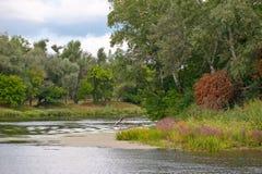 река пущи рисуночное Стоковое Фото