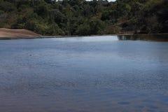 река пущи рисуночное Стоковое Изображение