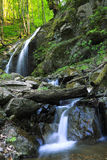река пущи Стоковые Изображения RF