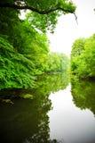 река пущи Стоковая Фотография