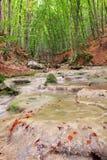 река пущи Стоковое Изображение