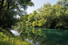 река пущи Стоковое Фото