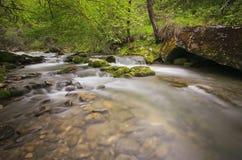 река пущи Стоковые Изображения
