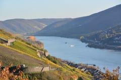 Река Рейн с золотыми листьями Стоковая Фотография