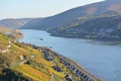 Река Рейн с золотыми листьями Стоковое Фото