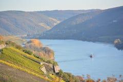 Река Рейн с золотыми листьями Стоковые Фотографии RF