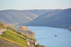 Река Рейн с золотыми листьями Стоковые Фото