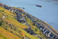 Река Рейн с золотыми листьями Стоковое фото RF