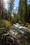 Река румян, Орегон стоковое изображение rf