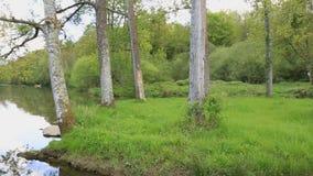 Река Сарта сток-видео