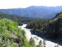 Река свирепствует высокие темные горы перевал Altai в зеленой долине стоковые изображения rf
