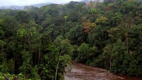 Река спрятанное среди деревьев одичалых тропических джунглей сток-видео
