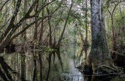 Река суживает след каное, охраняемую природную территорию соотечественника болота Okefenokee Стоковые Фотографии RF