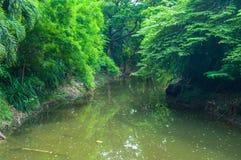 Река с деревом, бамбуком в парке стоковая фотография rf