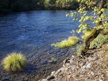 Река с золотыми банками стоковое изображение